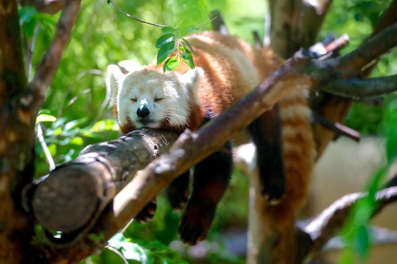 Firefox po ślōnsku